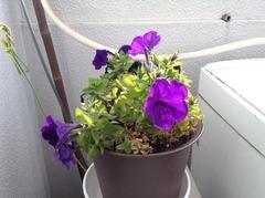 1年間咲き続けた花