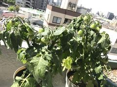 植物を育てる楽しさ