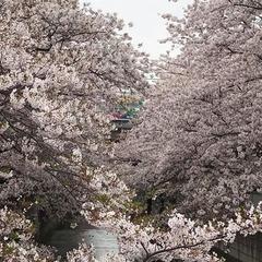 桜の中を走るかいじ