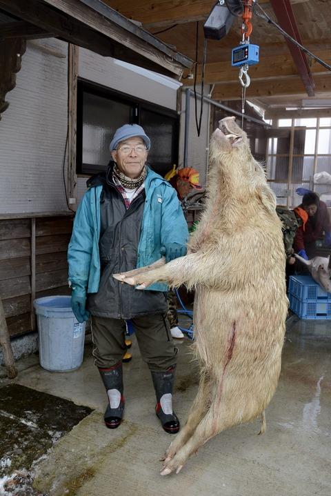 【熊本】仰天!白いイノシシ 猟師の渡辺さん 「焼き肉やしし鍋がおいしそう。感謝して食べる」