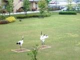 この鶴は動きません!(笑)見たらわかるよなぁ!