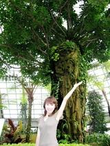 この木何の木気になる木〜♪