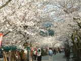 桜は撮り方にコツがあるよね?