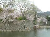 そろそろ葉桜も目立ってきたね〜