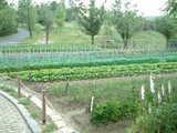 園内の菜園★ここで採れたものをレストランで使ってます!