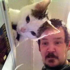 これ猫の模様がおっさんの頭部と