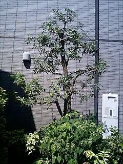 3年前の木