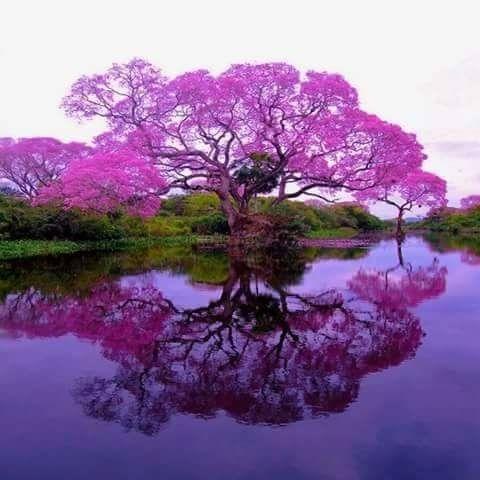 ピンクのラパチョ川辺