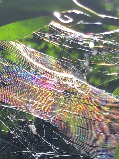 IMG_5409 実際の虹色のクモの巣