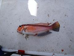 2011年10月真鶴ボート釣行 2