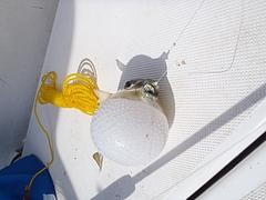 2011年10月真鶴ボート釣行 4