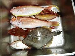 2011年10月真鶴ボート釣行 1