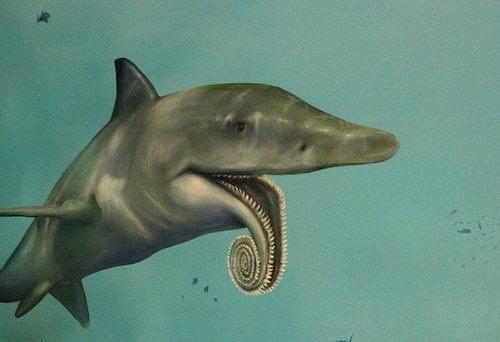 古代のサメさん、とんでもない形で復元されてしまう