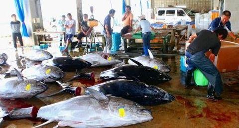 漁協とかいう日本の恥晒し