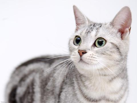 cat-wallpaper-42