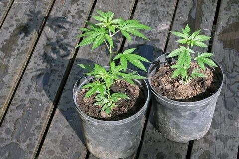 growoneplant