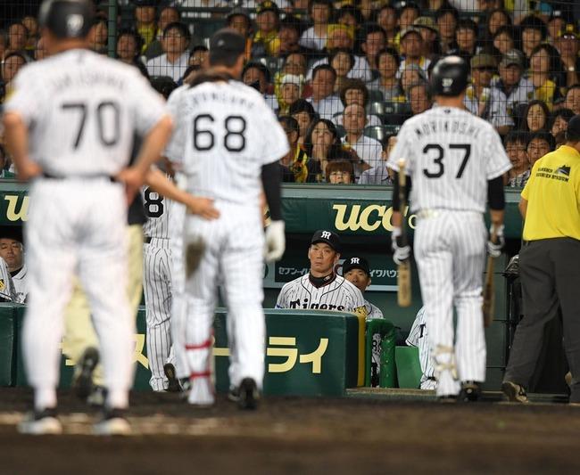 阪神・金本監督、負傷退場の俊介を糾弾「あそこでサインミスする方が悪い」