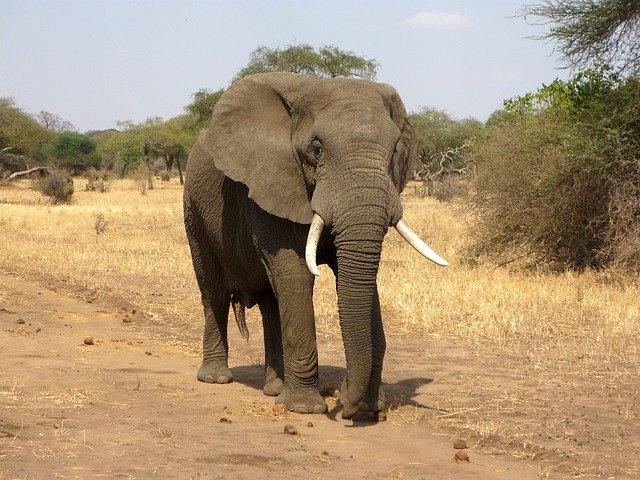 elephant-114543_640