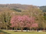 春日山原始林6