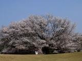 春日山原始林4