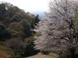 春日山原始林5