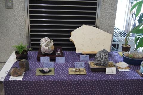 2017テラ-化石