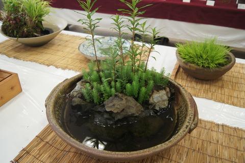 水草ビオトープ