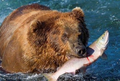 bears_pictured_fishing_in_alaska_05