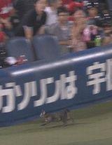 ハマスタで試合中に猫が乱入 ボールボーイ「予想外すぎる…」