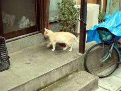 biwako040904_21