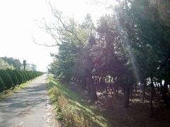 biwako_041218_11