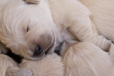 puppies-2985943_640