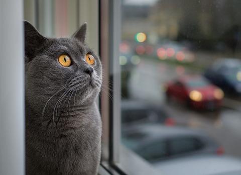 cat-3177825_640