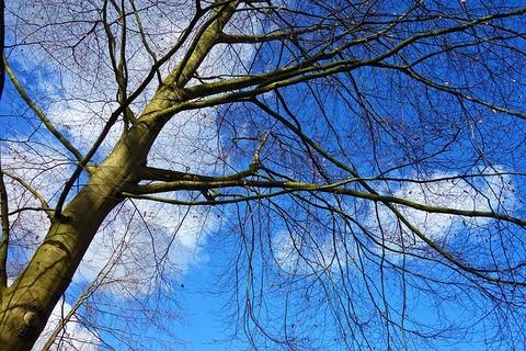 tree-3267598_640
