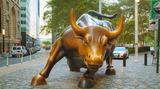 bull800x445