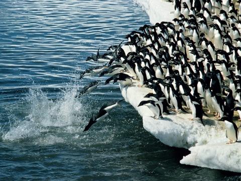 ペンギン壁紙