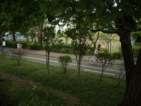 大泉交通公園の自転車道