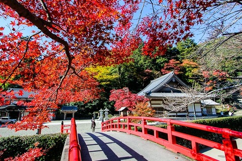 japan-guide-autumn-color-Ryuanji-Temple