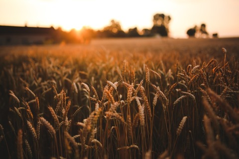 food-sunset-love-field-large