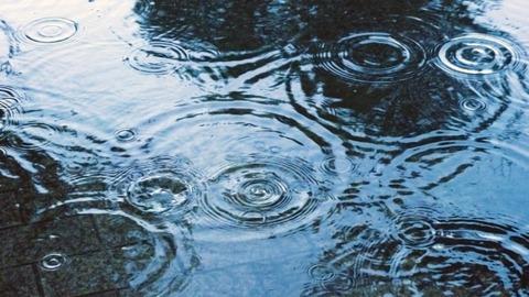 地面に広がる雨の足跡