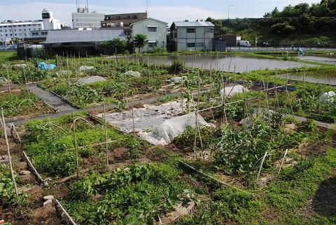 東京都内の貸し農園