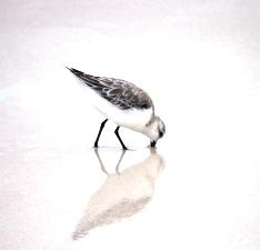くちばしをつっこむ鳥