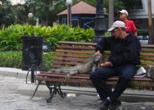 イグアナとおじさん