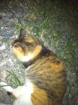 クリーニング屋のネコ