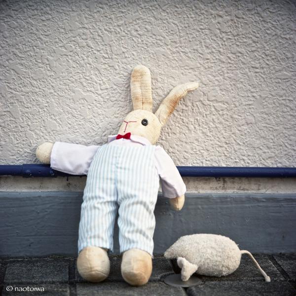 rabbit&mouse