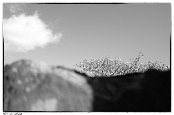 空と石と桜