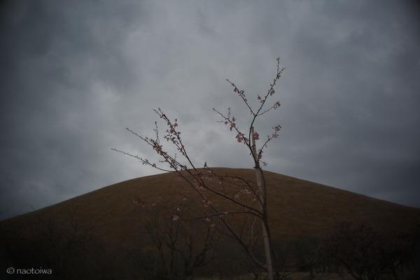 空と山と桜