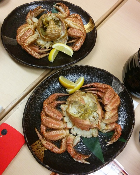 ishikari_dc_sakura_q