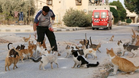 Syria-Ambulance-Driver-Feeds-An-Army-of-Cats-to-Keep-Them-Alive
