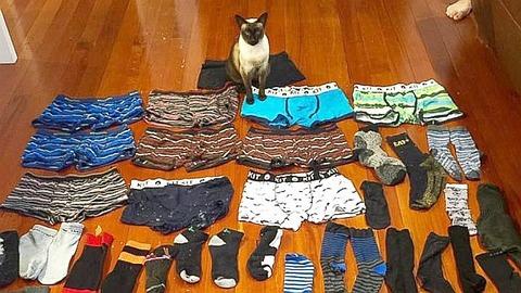 ht_cat_steals_men_underwear_new_zealand_em_1600323_16x9_992